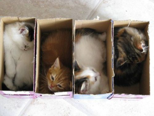 the-world_s-top-10-best-images-of-cats-in-boxes