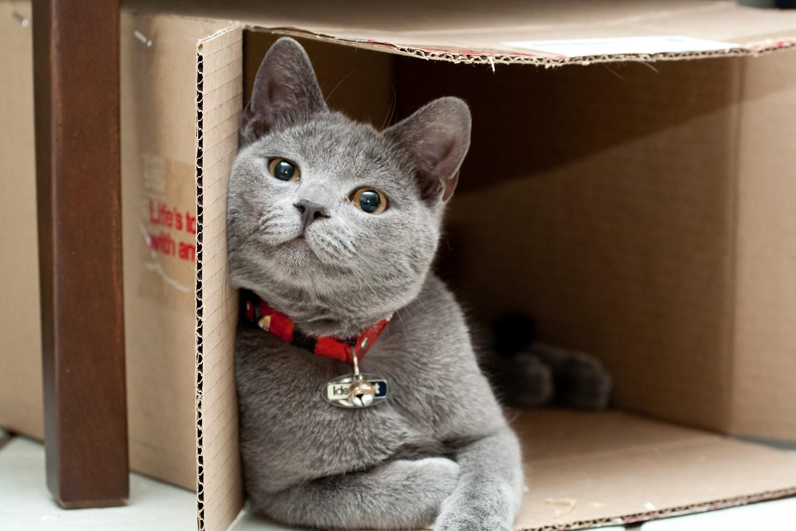 cat_in_box_large