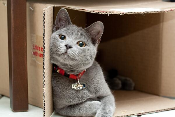 cat_in_box_large