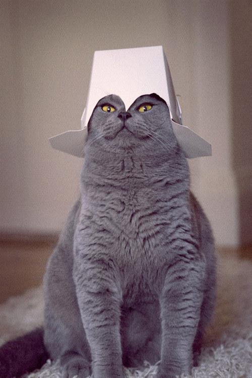 cat_in_command