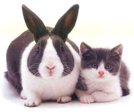 cat-and-rabbit