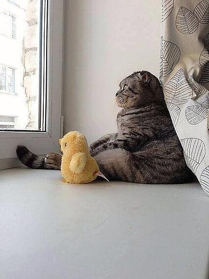 existential-cat
