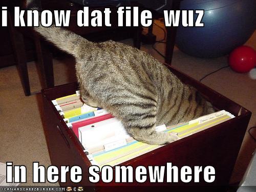 paperwork_cat