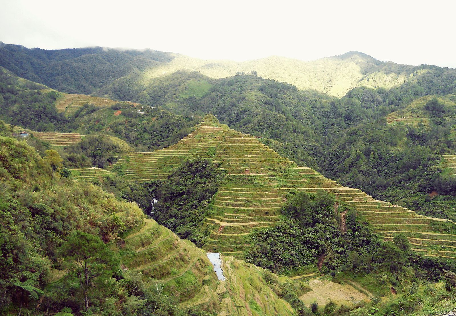 Banaue_Rice_Terraces,_Ifugao