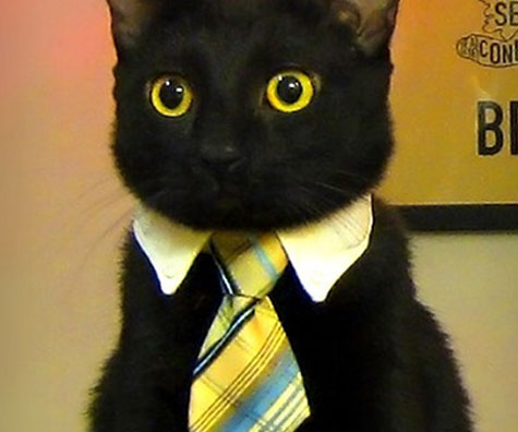 business-cat-white-collar-tie