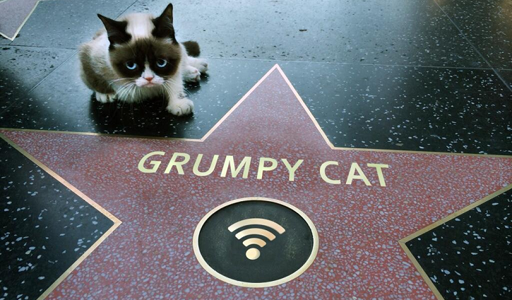 Grumpy-Cat-Walk-Of-Fame