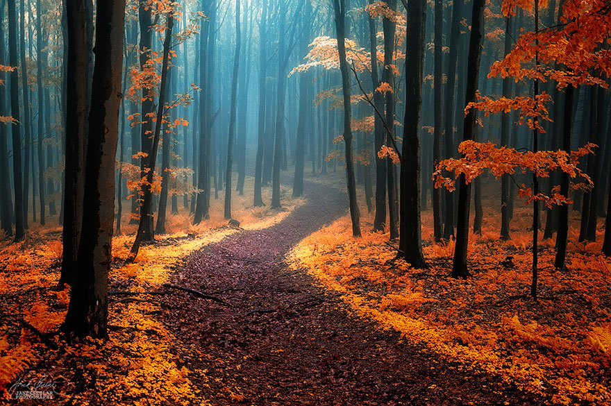 beautiful-mysterious-forests-11__880