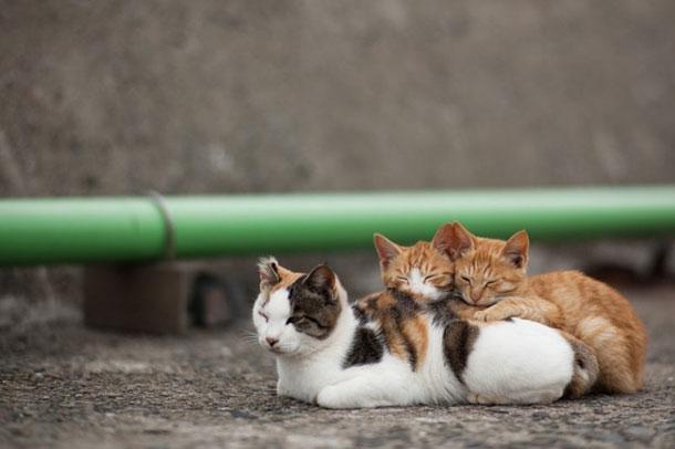50-Heart-Warming-Photos-From-Cat-Island-45