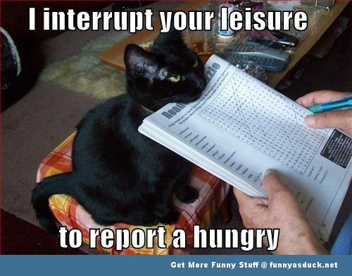 funny-cute-cats-pictures
