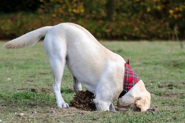 dog digging for Data