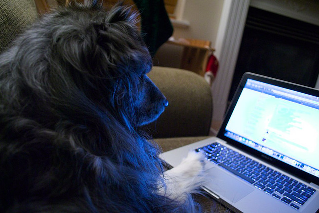 Dog_Laptop_Browse